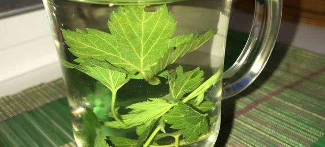 листья смородины полезные свойства