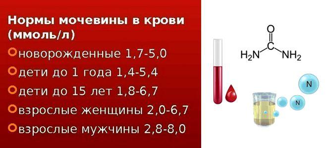 мочевина в крови норма по возрасту таблица