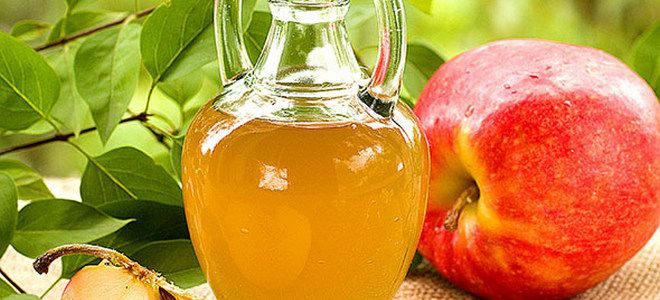 вино из яблочного компота