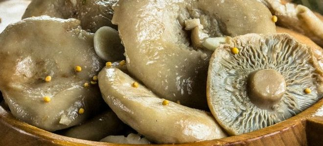 маринованные грузди рецепт на зиму хрустящие