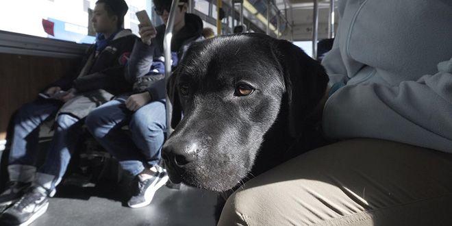 Про собак фильм