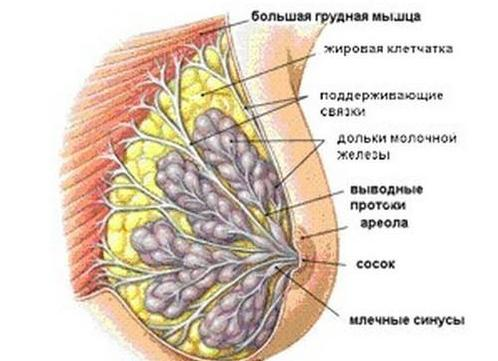 Женская грудь изнутри, с набухшими сосками порно