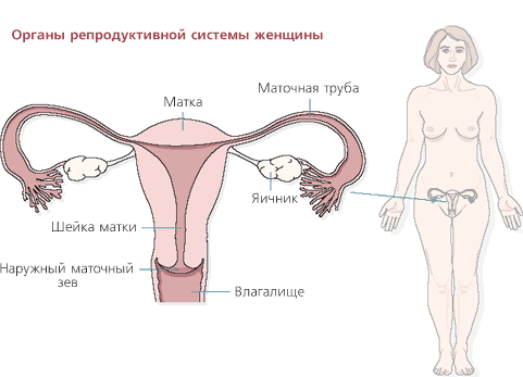 prostitutki-seks-krasiviy-zhenskiy-organ-foto-onlayn-seks