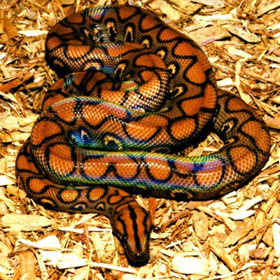 К чему снятся змеи в воде Что значит если змея в воде кусает во сне