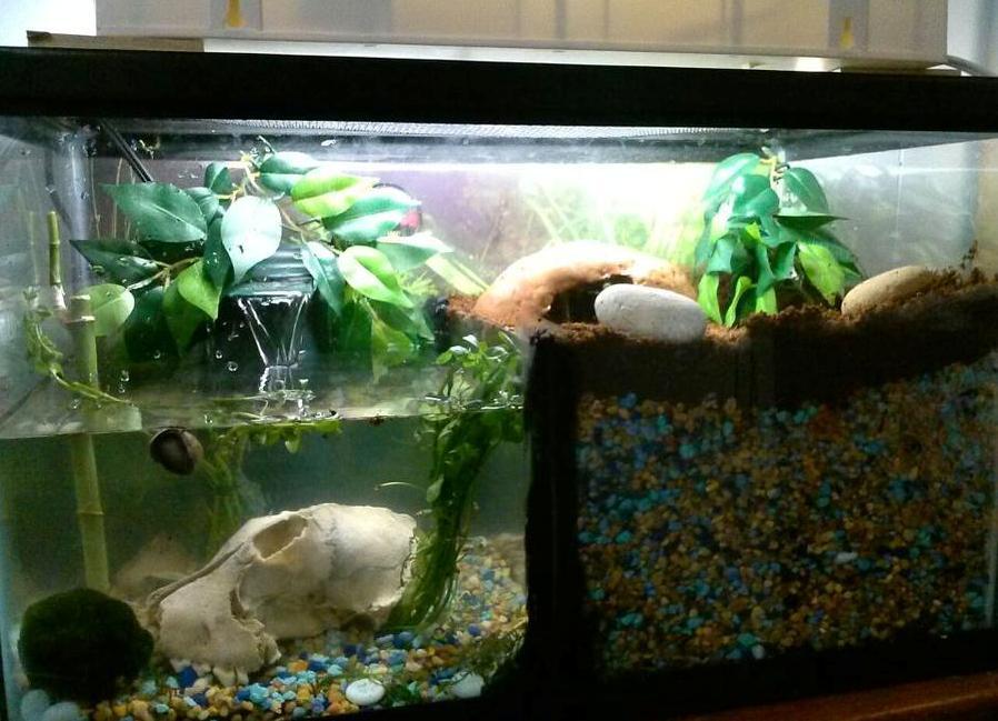 Как обустроить аквариум для красноухой черепахи: SYL Как обустроить аквариум в домашних условиях