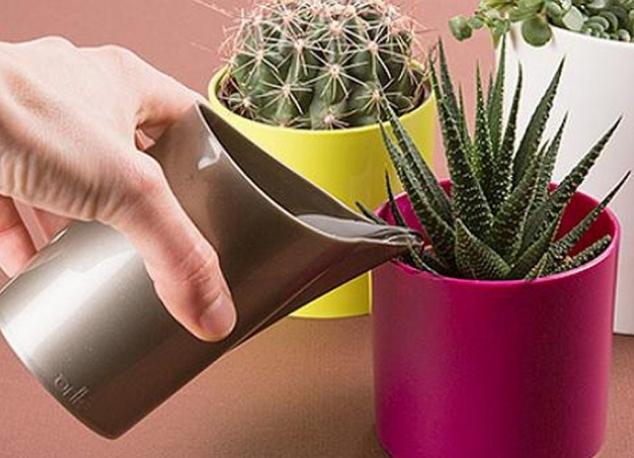 как часто поливать кактус весной