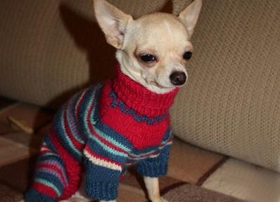 Одежда для собак чихуахуа для девочек