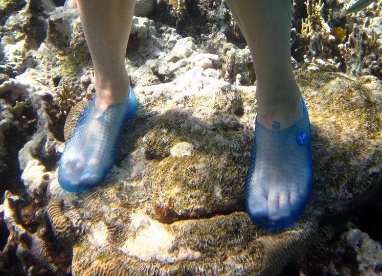 626400c90 Коралловые тапочки