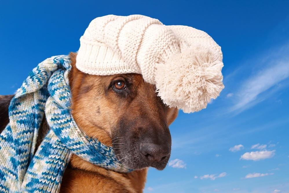 аллергия на собачий корм у человека