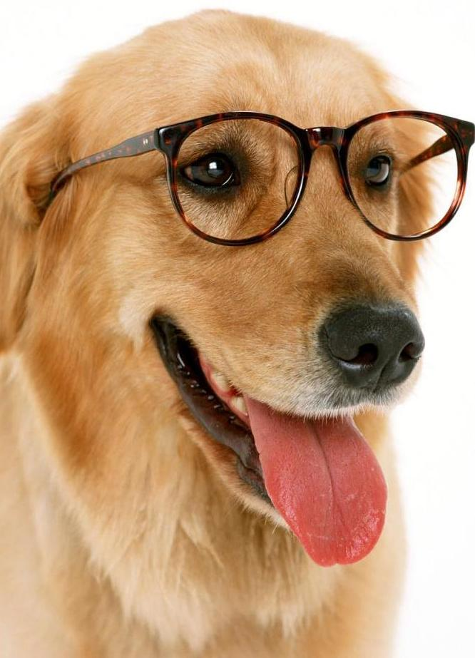 What To Do For Dog Eye Infection