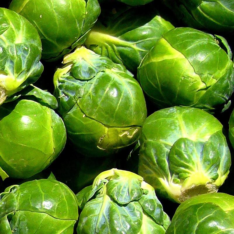 картинки брюссельская капусты погоня
