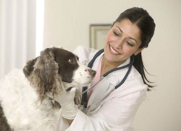 Кашель у собак: какой бывает, причины, лечение