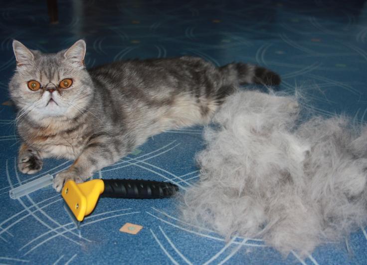 Поздравление с новым годом для кошек