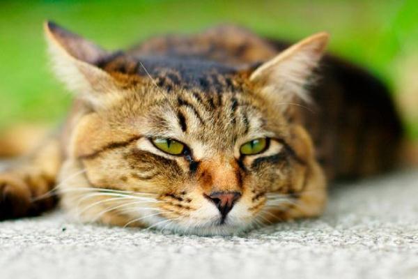 Сколько живут кошки - таблица средней продолжительности жизни разных пород