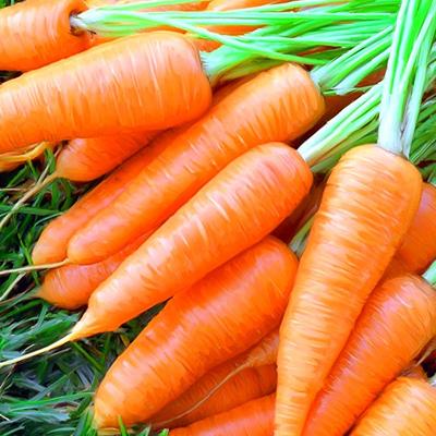 Морковь по соннику
