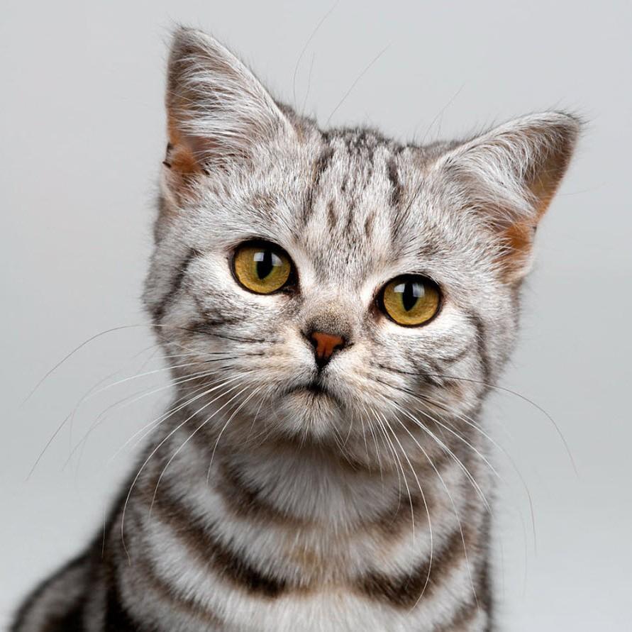 К чему снятся много красивых кошек