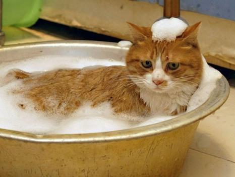 Можно ли мыть кошку после вязки