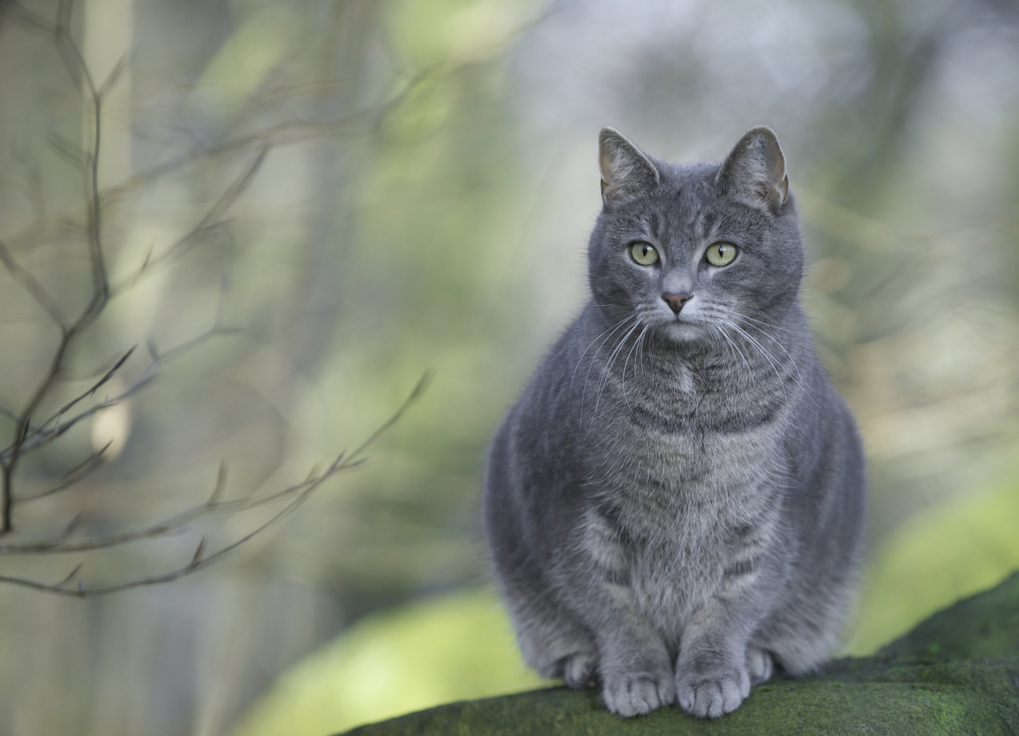 Как назвать кошку девочку серого цвета