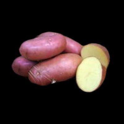 Картофель рябинушка описание сорта фото отзывы