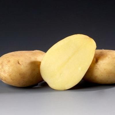 Картофель Тимо: описание и характеристика сорта, урожайность с фото