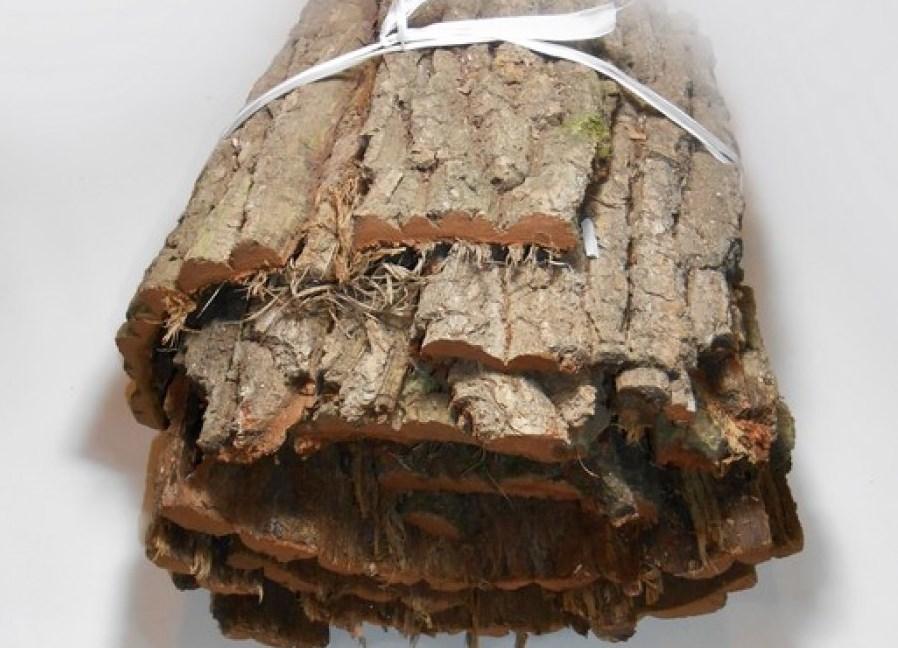 Настой коры дуба в гинекологии