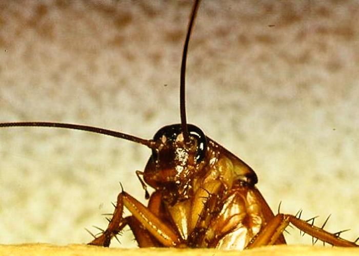 Избавиться от тараканов своими руками 55