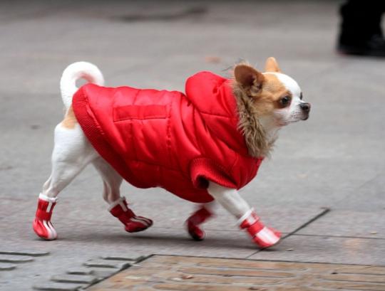 Обувь для собак своими руками 7d274cac1af