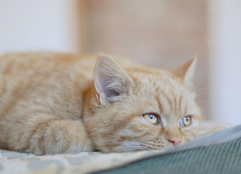 Что делать, если у кошки пена изо рта?