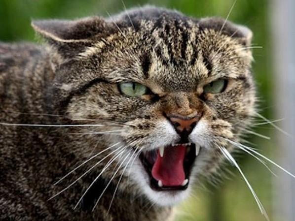 Почему кошка ест своих котят: причины кошачьего каннибализма