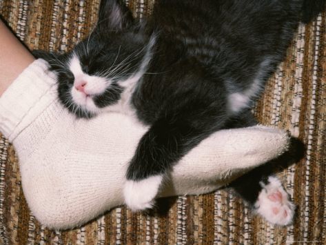 Почему кошки любят спать в ногах