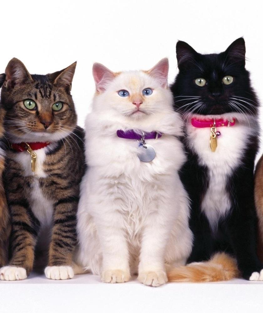 Одна кошка две кошки трикошки картинка