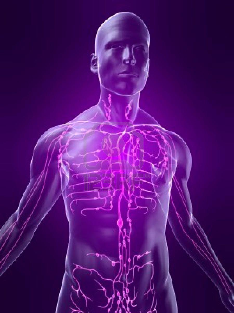 Как прощупать лимфоузлы на теле человека: расположение на фото, описание техники пальпации и оценки