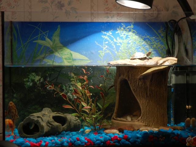 Как обустроить акватеррариум для водных черепах - Черепахи 88