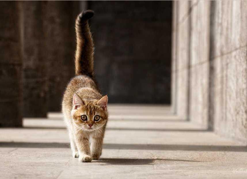 Зачем коту нужен хвост