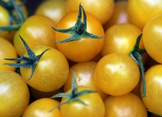 сорт помидор желтого цвета