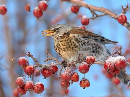 Народные приметы зимы ранней, поздней, теплой, холодной, погоды зимой, зимние приметы на урожай для детей, дошкольников, школьников: слова