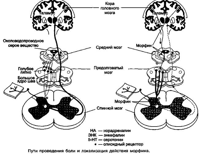 Механизм действия анальгетика