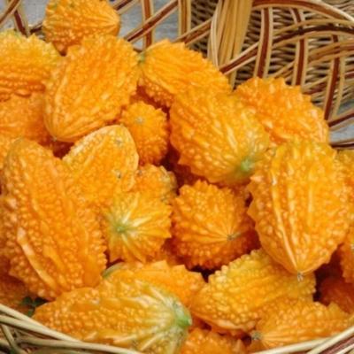 Момордика: что это за растение, выращивание и уход, как употреблять в пищу