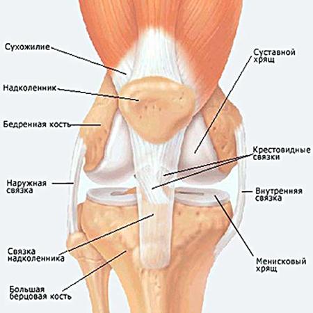 Болит сзади колено пластырь для лечения суставов тяньхэ гутун тегао отзывы