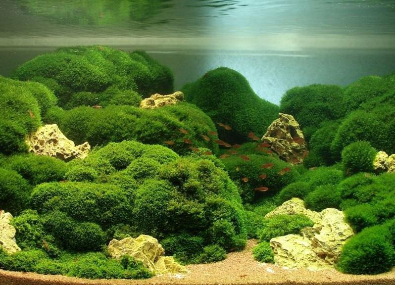 Декорирование аквариума своими руками фото 167