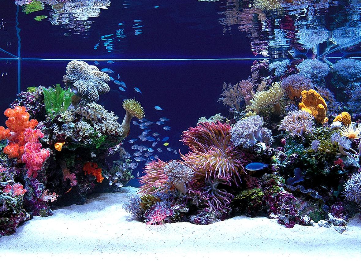 Декорирование аквариума своими руками фото 303