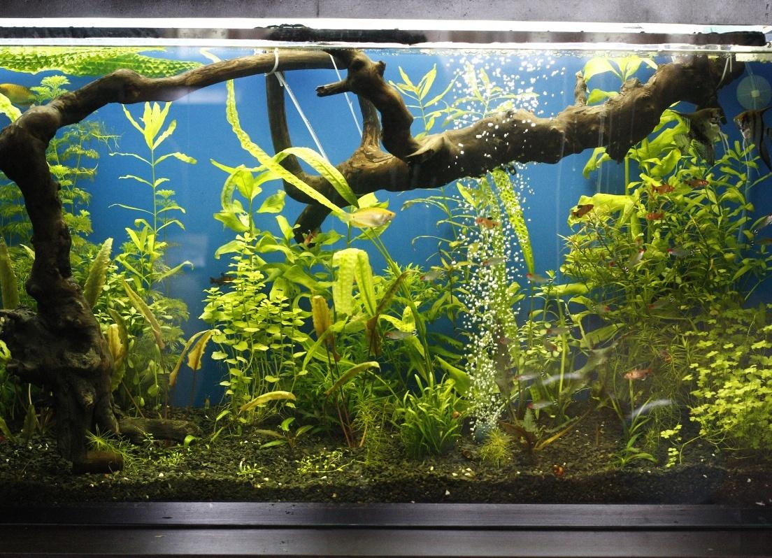 как украсить аквариум своими руками фото рабочий стол теме