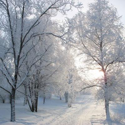 Народные приметы о предстоящей зиме