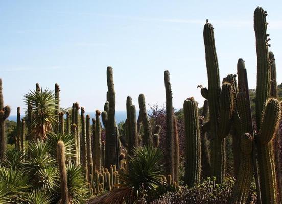 Пустыни какого материка являются родиной кактусов