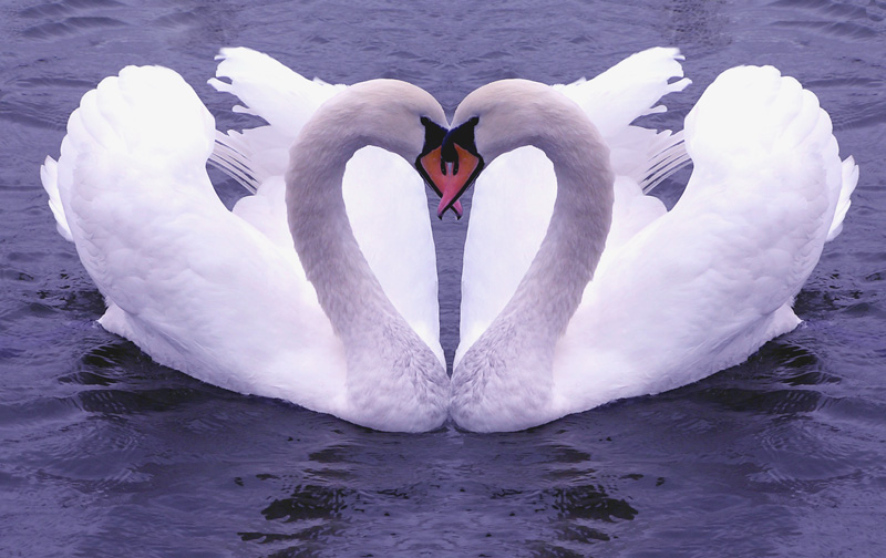 картинки по фен шуй для любви