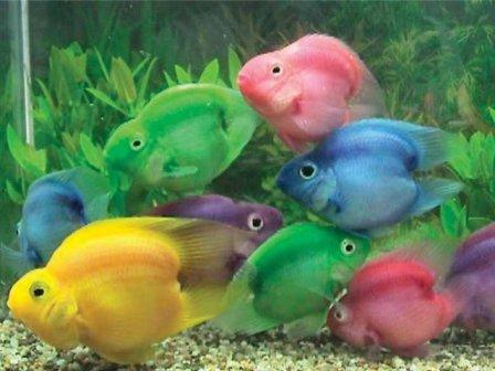 аквариумные рыбки фото цена и название