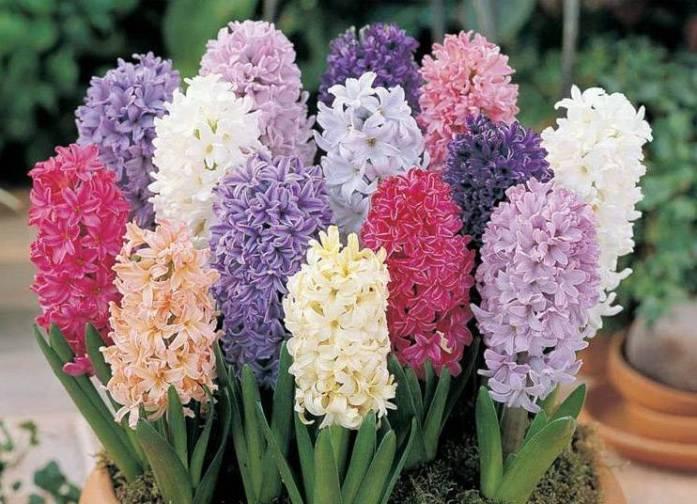 Самые необычные цветы в мире ТОП 30 Science Debate