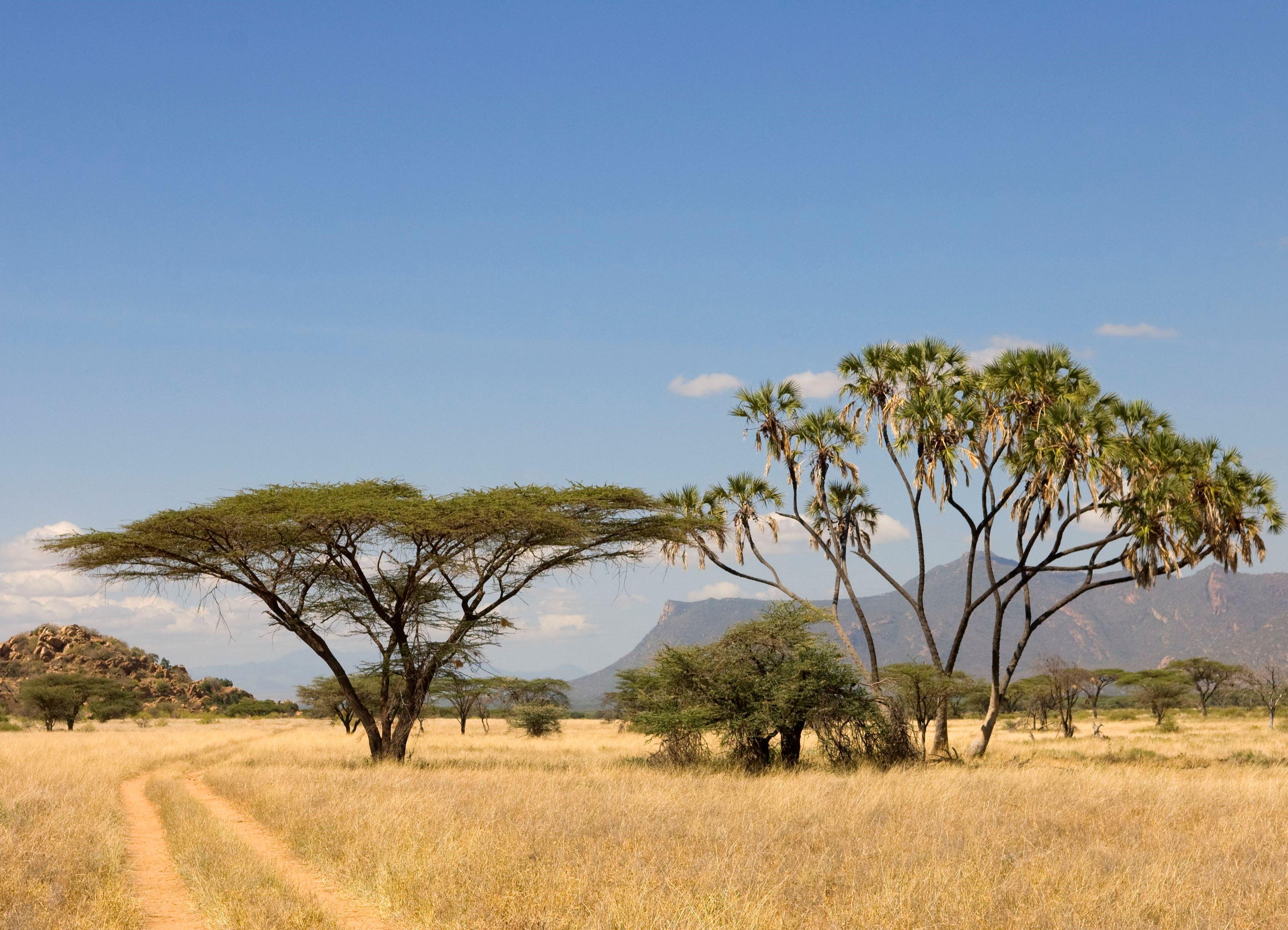 пчелиных картинка природа африки без животных будут