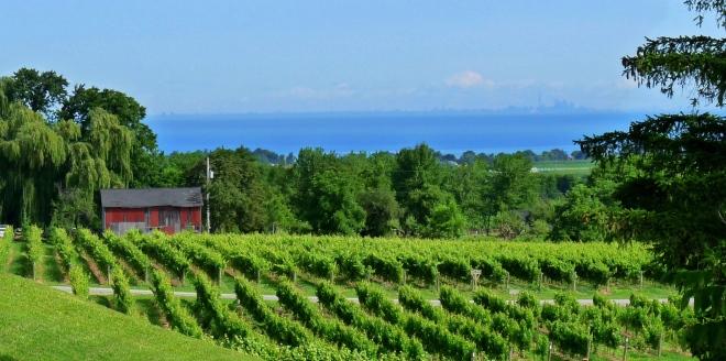 На берегах озера располагаются виноградники