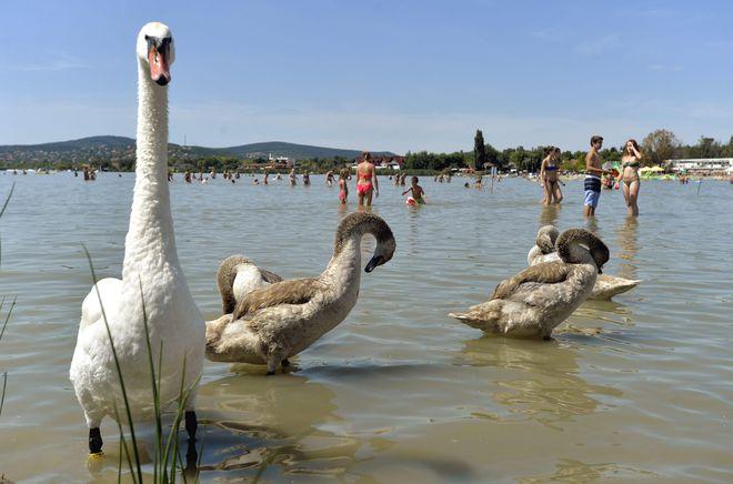 Представители фауны озера Веленце